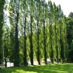 schnellwachsende bäume sichtschutz