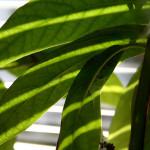 Pflegeleichte Pflanzen finden